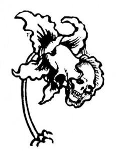 Orchideengarten--skullflower-detail